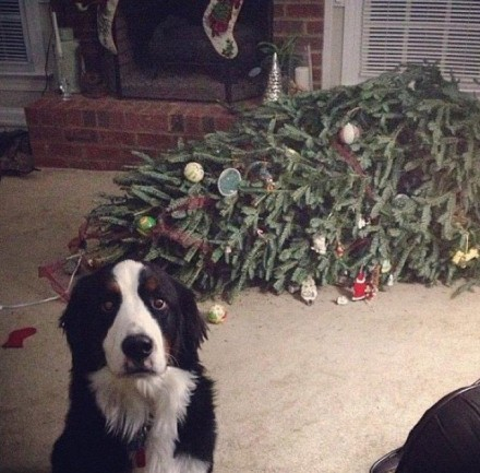 Guest Blogger: 5 Tips to Pet-Proof Your Holiday Decorations by Timi Burke from Rent.com