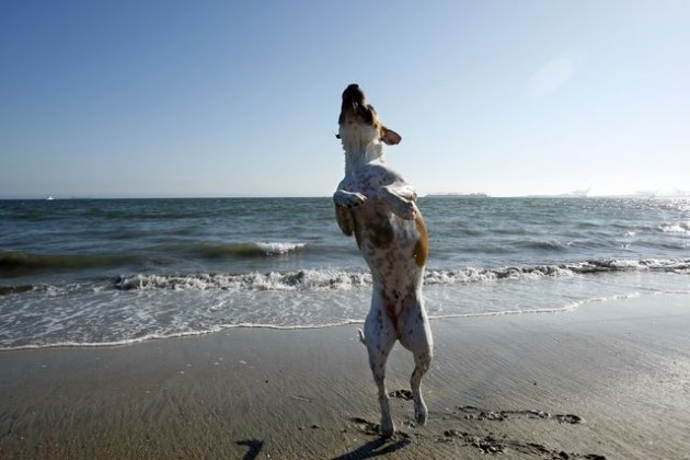 Looking For A Pet Friendly Rental in Los Angeles? Head To Santa Monica