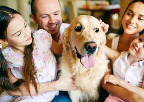 FREE WORKSHOP SERIES: PETS IN RENTALS